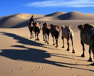 The Highlights of Mongolia