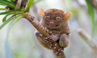 Wildlife Adventures in the Philippines