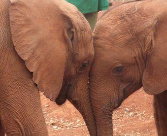 Southern Ethiopia, Gorillas & The Zambezi