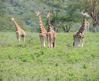 Ethiopia, Gorillas & The Zambezi