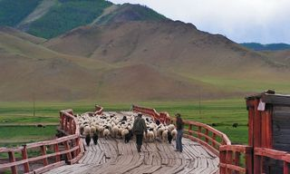 The Silk Road & Mongolia