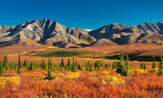Wilds Of Alaska & Western Canada