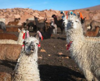 Altiplano, Patagonia & Iguazu With Carnival