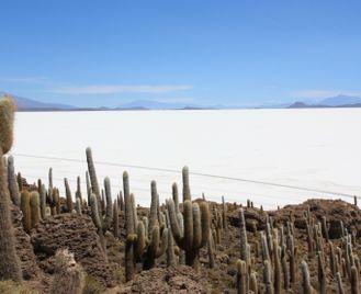 Bolivian Salt Flats Safari