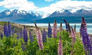 Walking New Zealand - North to South Island Explorer