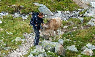 Across Austria's Zillertal Alps