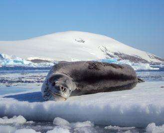Spirit of Shackleton Expedition