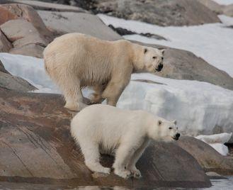 Arctic Highlights - Svalbard, Greenland & Iceland