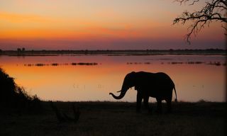 Okavango and Botswana Family Safari