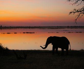 Okavango and Botswana Family Safari