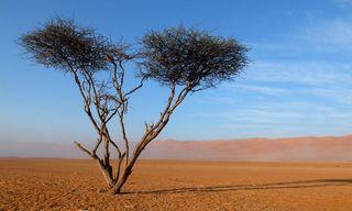 The Walks, Wadis and Wonders of Oman