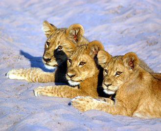 Namibia Desert, Etosha and Caprivi Camping Safari