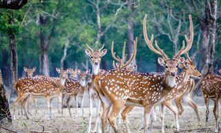 Sundarbans Safari Tour (8 Days)