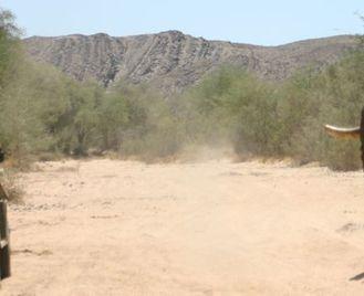 Family Desert Elephants in Namibia