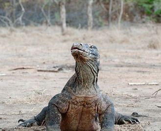 Komodo Dragon Adventure Tour