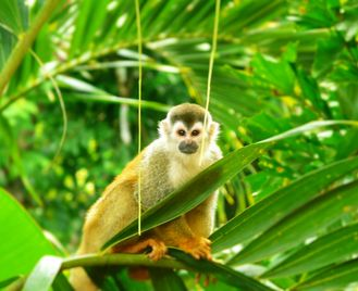 Local Costa Rica