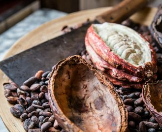 The story of Guatemala's cacao by helicopter