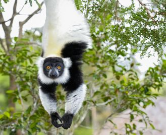 Best of Madagascar