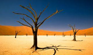 Southern Namibia self-drive