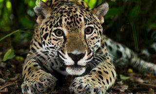 Nicaragua's natural treasures