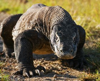 Flores overland: from crater lakes to komodo dragons