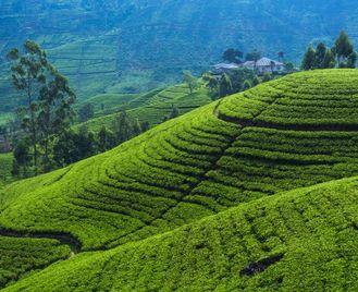 Sri Lanka off the beaten track