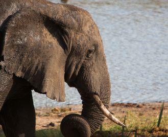Best of The Elephant Coast