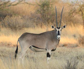 Harar and Awash National Park