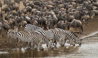 Migration Footsteps