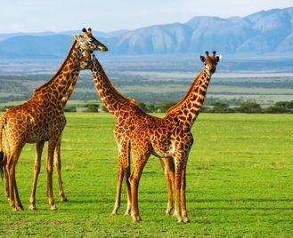 The Real Tanzania