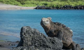 Luxury Galapagos Cruise Package