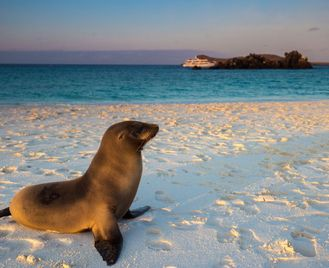 The Complete Galapagos