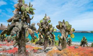 Economical First Class Galapagos Package - Eastern Islands