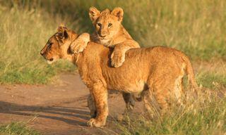 Serengeti To Zanzibar