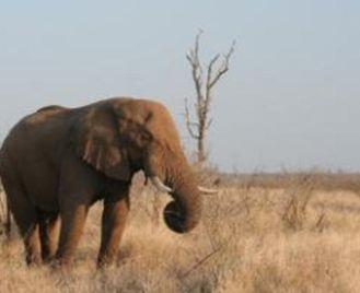 Eswatini - The Kingdom of Swaziland Explored (12 Days)