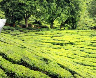 India's Hill Stations & Tea Plantations