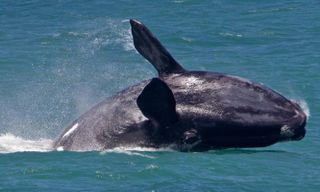 South Africa: Cape, Wine & Whales