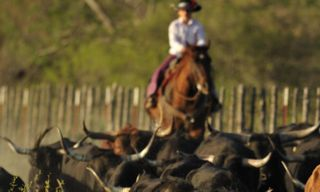 The Texas Lone Star Road Trip