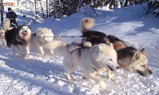 Mahikan Dog Sled Safari