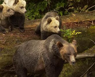 Bears and Whales of British Columbia