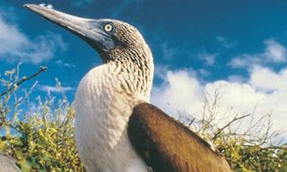 Peru and the Galapagos Islands Tour - 17 Nights