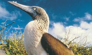 Peru and the Galapagos Islands Tour - 17 Nights