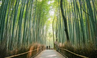 Journey through Japan: From Tokyo to Kyoto Escorted Tour
