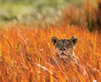 Kenya & Tanzania Wildlife Safari scorted Tour