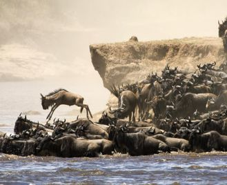 The Great Migration Safari in Style Escorted Tour
