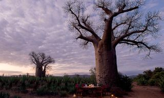 A Naturalist's Guide to Madagascar with Dr Charlie Gardner