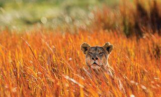 Botswana Safari in Style