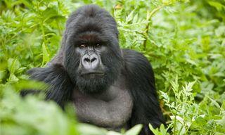 Journeys with Purpose - Wildlife Conservation, Gorillas & Culture of Rwanda