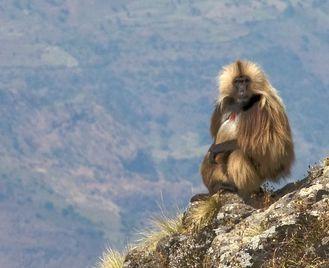 Hiking in the Simien Mountains Ethiopia
