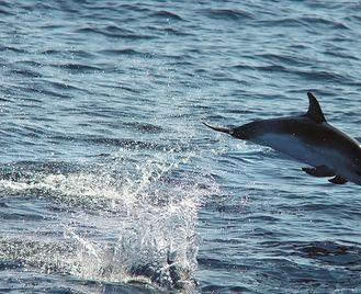 Madeira - Island Wildlife and Nature